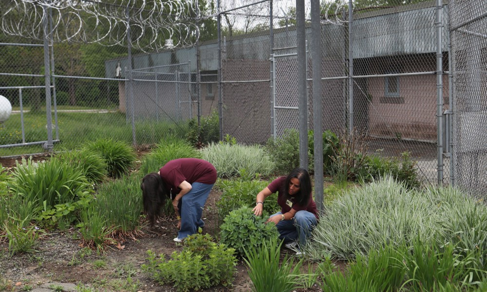 NIANTIC, CT - MAY 24:  Female prison inmates work in the garden of the York Community Reintegration Center on May 24, 2016 in Niantic, Connecticut. The center is part of the York Correctional Institution, which houses all of the states more than 1,000 female inmates. The unit is designed to prepare prisoners for successful reintegration into society after serving out their sentences. Criminal justice and prison reforms are taking hold with bi-partisan support nationwide in an effort to reduce prison populations, while saving taxpayer money. The state's criminal justice reforms are part of Connecticut Governor Dannel Malloy's 'Second Chance Society' legislation.   (Photo by John Moore/Getty Images)