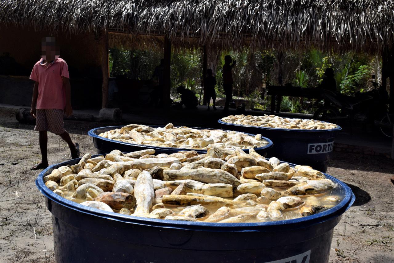 Produção-de-farinha-das-famílias-em-2021-após-retomada_Foto-Ronilson-Costa_CPT-MA